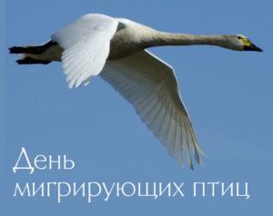 Всемирный день перелетных птиц история