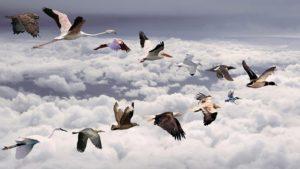 Всемирный день перелетных птиц