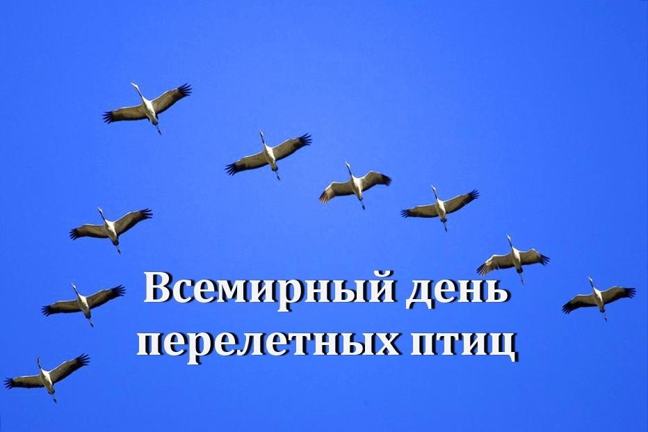 день перелетных птиц