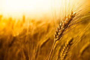 день работника сельского хозяйства